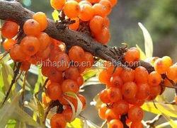 Natural 100% seabuckthorn flavones seabuckthorn fruit powder extract