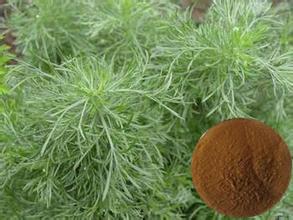 Artemisia Annua Plant Extract,Artemisinin P.E.99%/Wormwood Leaf Extract/Wormwood Extract