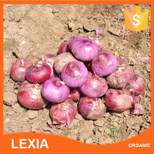 High quality with Lowest price fresh red onion