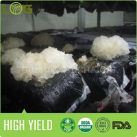 2014 Bulk for sale exporter chinese high quality lowest price flat white jelly mushroom log