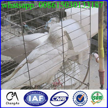 Farming poultry equipment automatic metal pigeon cages /cage pigeon