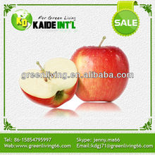 Professional Fruit Supplier Fresh Red Delicious Apple
