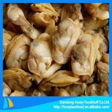 quality seafood frozen cooked clam fresh