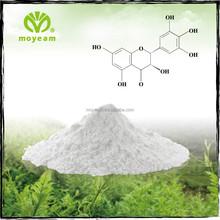 Plant Extract Moyeam White Tea Extract for Improve Immunity