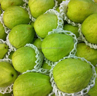 USA Market Popular Wholesale Plastic Material and Food Industrial Use Papaya Export Packaging Nets