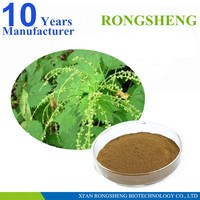 Factory Supply 100% Pure Natural Nettle Root Extract