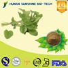 China Supplier Pharmaceutical Ingredients Anti-bacterial Lemon Balm Extract