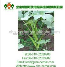 100% Natural Okra extract 10:1,20:1 with hot sale. free sample