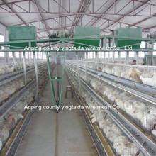 Profession galvanisé création automatique batterie de poulet poules à vendre