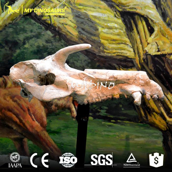 museum fossil.jpg