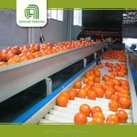 fresh fresh orange producers for wholesales