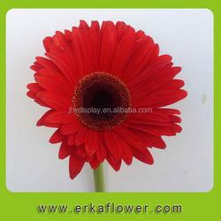 rose (roses) - fresh cut flowers from israel. fresh flowers exporter flora export s.g. israel ltd
