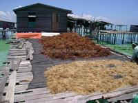 mastophealth seaweed
