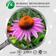 best price Cichoric acid from Echinacea Purpurea Extract