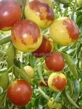 2015 hot selling winter jujube dates for buyers