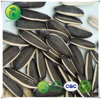 Different Types of Organic Oil Sunflower Seeds