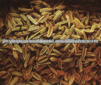 Seca semillas de alcaravea especias
