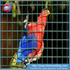 1x1 small bird cage wire mesh / pvc coated welded iron wire mesh for cages
