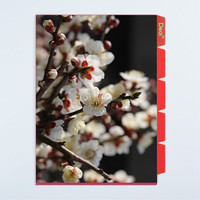 Creative design custom made 5 pockets PP plastic L shape file folder with white plum blossom photo and 5 indexes