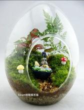 wholesale clear glass egg terrarium decoration