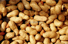 Chinese Manufacture Directly Sell Roasted Peanut First Grade Oil Flavor