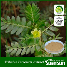 saponins 100% natural pure tribulus terrestris extract