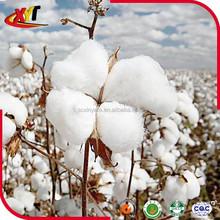 100% Organic Raw Cotton