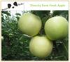 Wholesale Directly Farm Fresh Green Fuji Apple Good Price