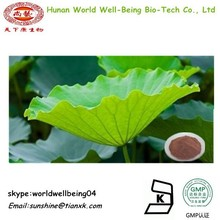 Flavonoids Lotus Leaf Extract / Lotus Root Powder Extract 20:1 /Lotus Seed extract Nuciferin 0.2% 1% Lotus Leaves Extract