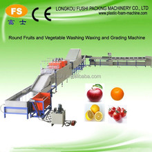 Ponkan Orange(Citrus) cleaning and waxing and grading processing machine