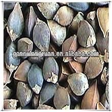 Chinese origin raw buckwheat