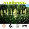 Yucca filamentosa powder, 30% sarsaponin Yucca Extract yucca Extract Powder
