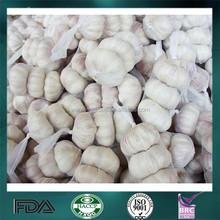 Fresh garlic seed wholesale garlic