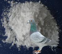 Generic Veterinary Drugs for Pigeons Antibiotic Powder Amoxicillin - Tylosin Premix Powder
