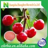 High Quality 17% Vc Acerola Cherry Extract