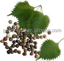 China Origin Purple Perilla Seeds (Zisu Seeds) For Oil
