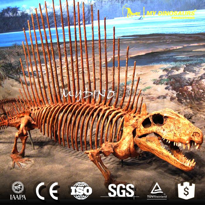 Dimetrodon skeleton1.jpg