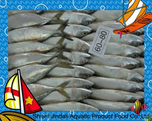 Frozen W/R india mackerel China seafood with 4-6pcs/kg