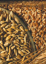 durum wheat for sale