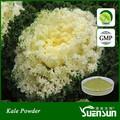 Gmp fabrik-versorgungsmaterial bio-grünkohl Pulver/grünkohl-extrakt