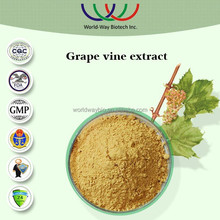 Free sample made in China GMP factory supply anti-oxidant grapevine extract resveratrol vitis vinifera l.