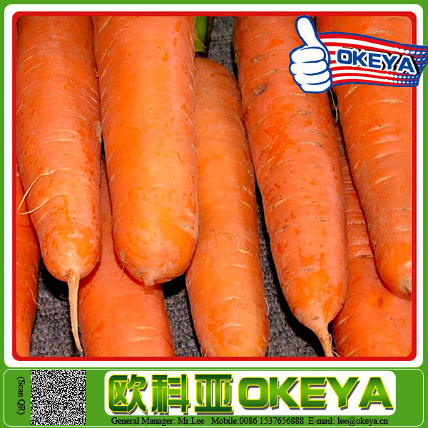 2014 Wholesale Latest all bangladeshi vegetables