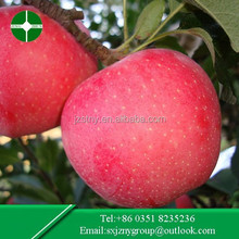 High Quality Fresh Fuji Apple in the most Competitive price