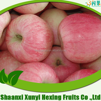 New arrival sweet delicious scientific name of all fruits