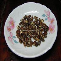 Ping guo zhong zi 100% fresh and high neatness apple fruit seed
