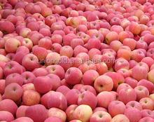 YAN TAI fresh apple fruit for sale