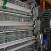 automatic egg layer battery cages for chicken and quails