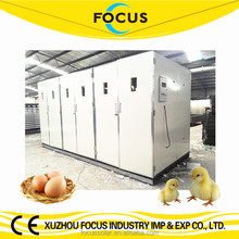 Focus industry group hot sale best quality 30000 eggs large size chicken egg incubator with spare parts and 3 years warranty
