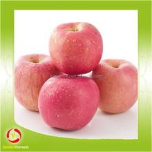 chinese apple fruit fresh apple fruit for sale
