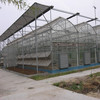 Cheap Used Commercial Galvanized Steel Greenhouse Frames For Sale